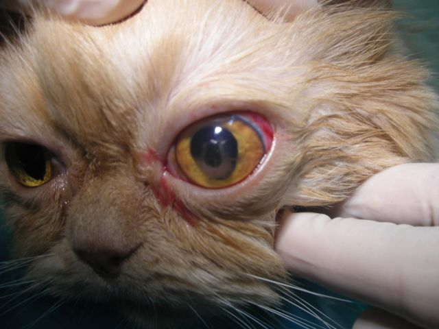 Úlcera de Córnea